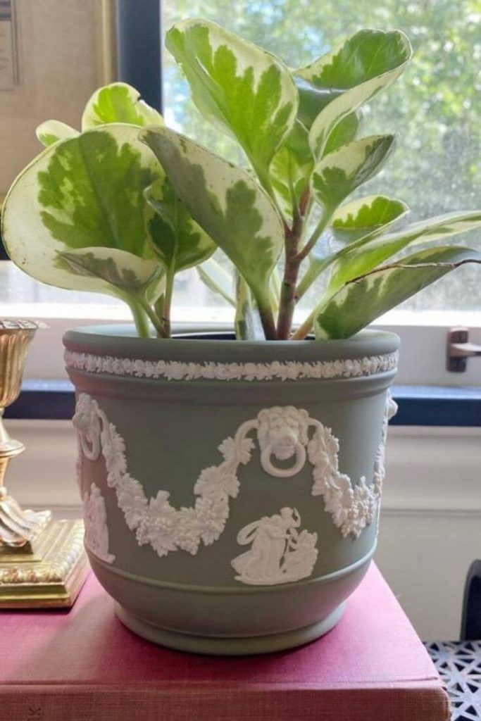 Green Jasperware vase with potted plant