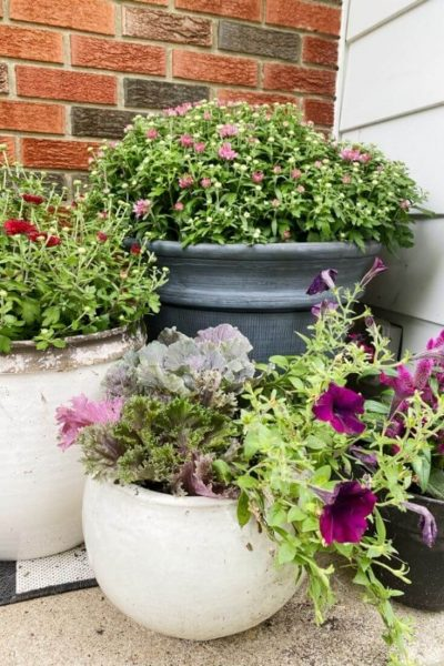 Close up of mums, petunias, cabbage, and kale in pots on front porch