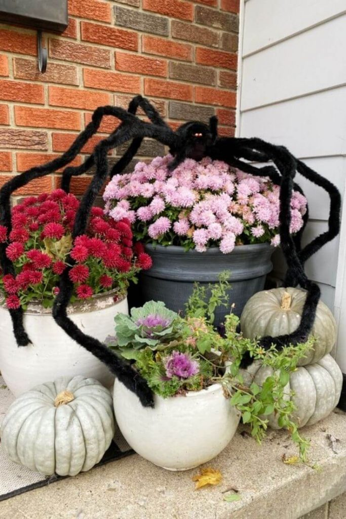 Large black fake spider displayed atop potted mums, pumpkins, and cabbage on a porch